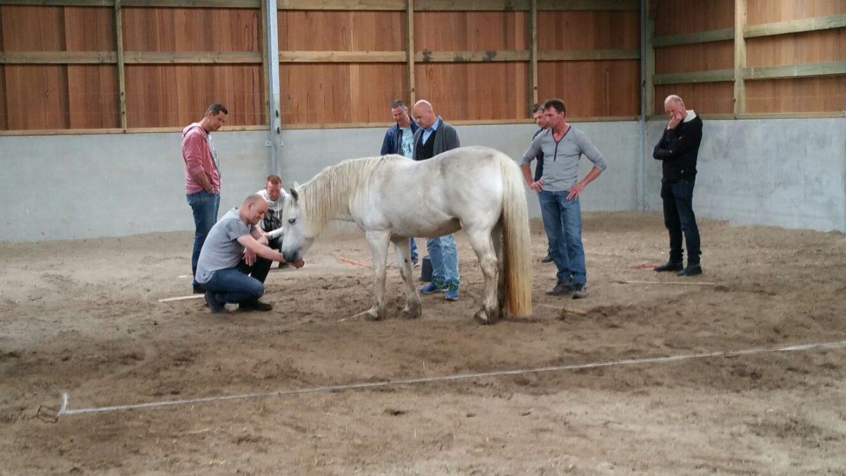 paardencoaching initiatie