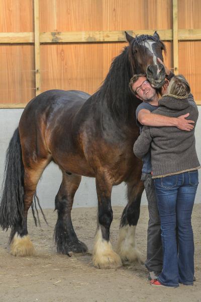 coaching met paarden coaching